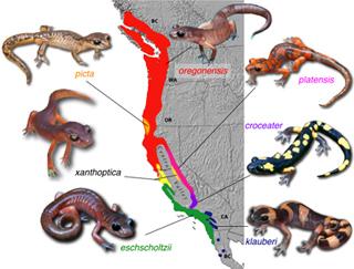 скачать игру Evolution Of Species - фото 7