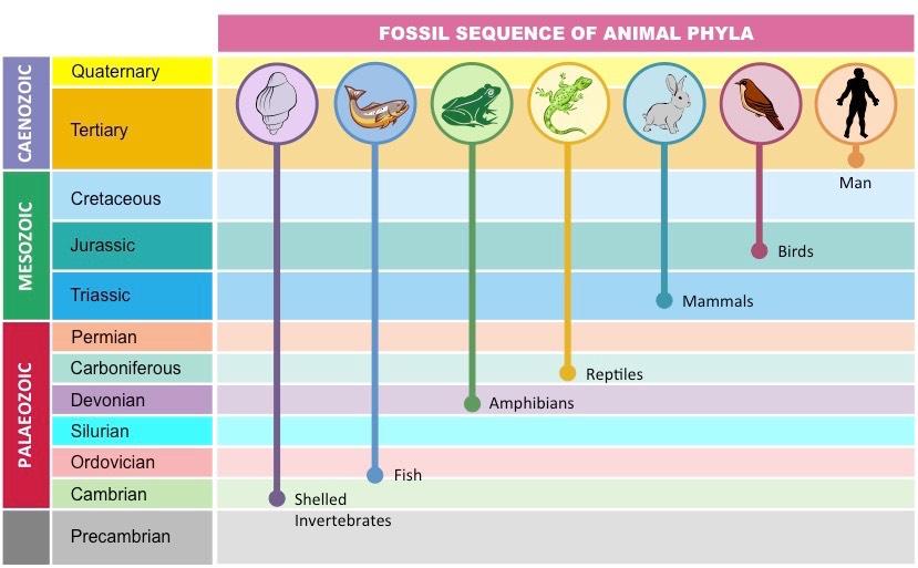 fossil succession